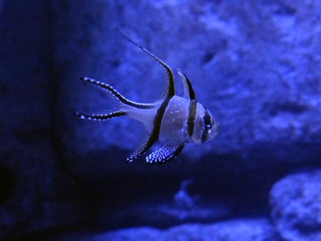 Um dos peixinhos do aquário. Só não pergunte o nome. :/
